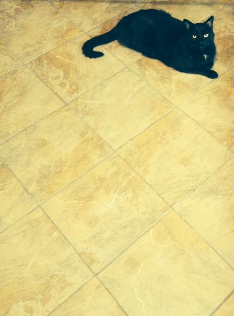 le chat sous chef