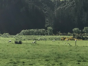 a lamb & mutton-dotted field in New Zealand; we did our best to eat as many as we could, but the sheep:person ratio there is roughly 15:1